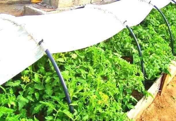 Реализую новый парник для огорода