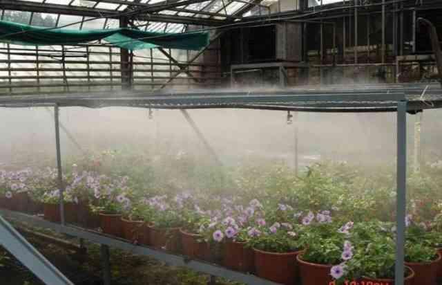 Система туманообразования в теплице