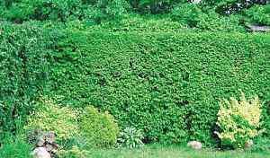 Шпалерная сетка для плетущихся растений