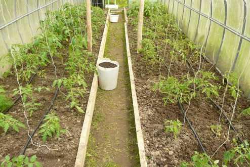 Капельный полив на грядки на 80 растений