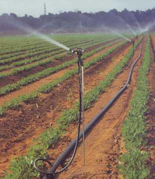 Спринклеры для полива открытого и закрытого грунта