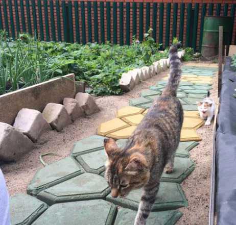 Сделайте идеальную садовую дорожку на даче