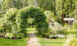 Дугообразные арки для винограда