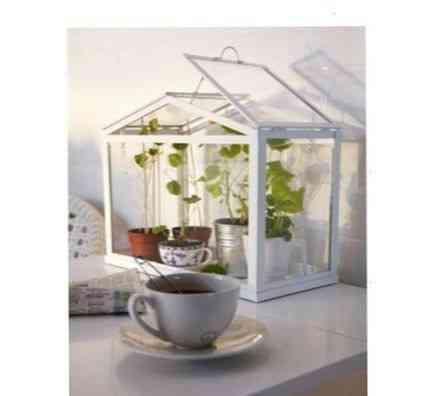 Мини-теплица для домашних растений