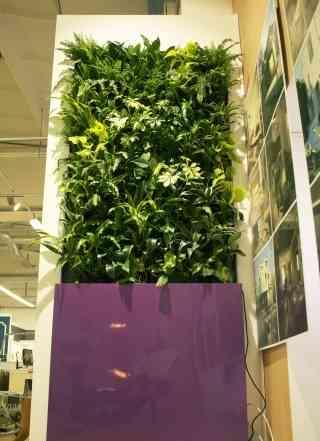 Вертикальное озеленение живыми растениями и мох